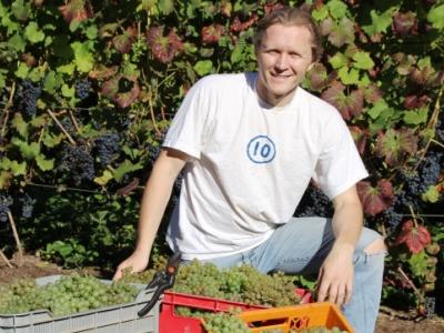 Vynuogės Lietuvoje