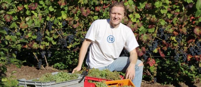 vynuoges Lietuvoje